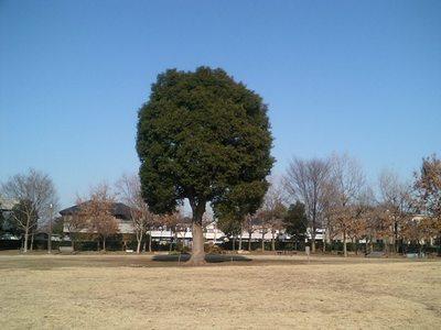 狛江の前原公園